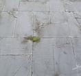Hofplatten aus Beton