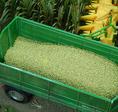 Ladung mit 100g Mais