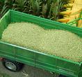 Ladung mit 150g Mais